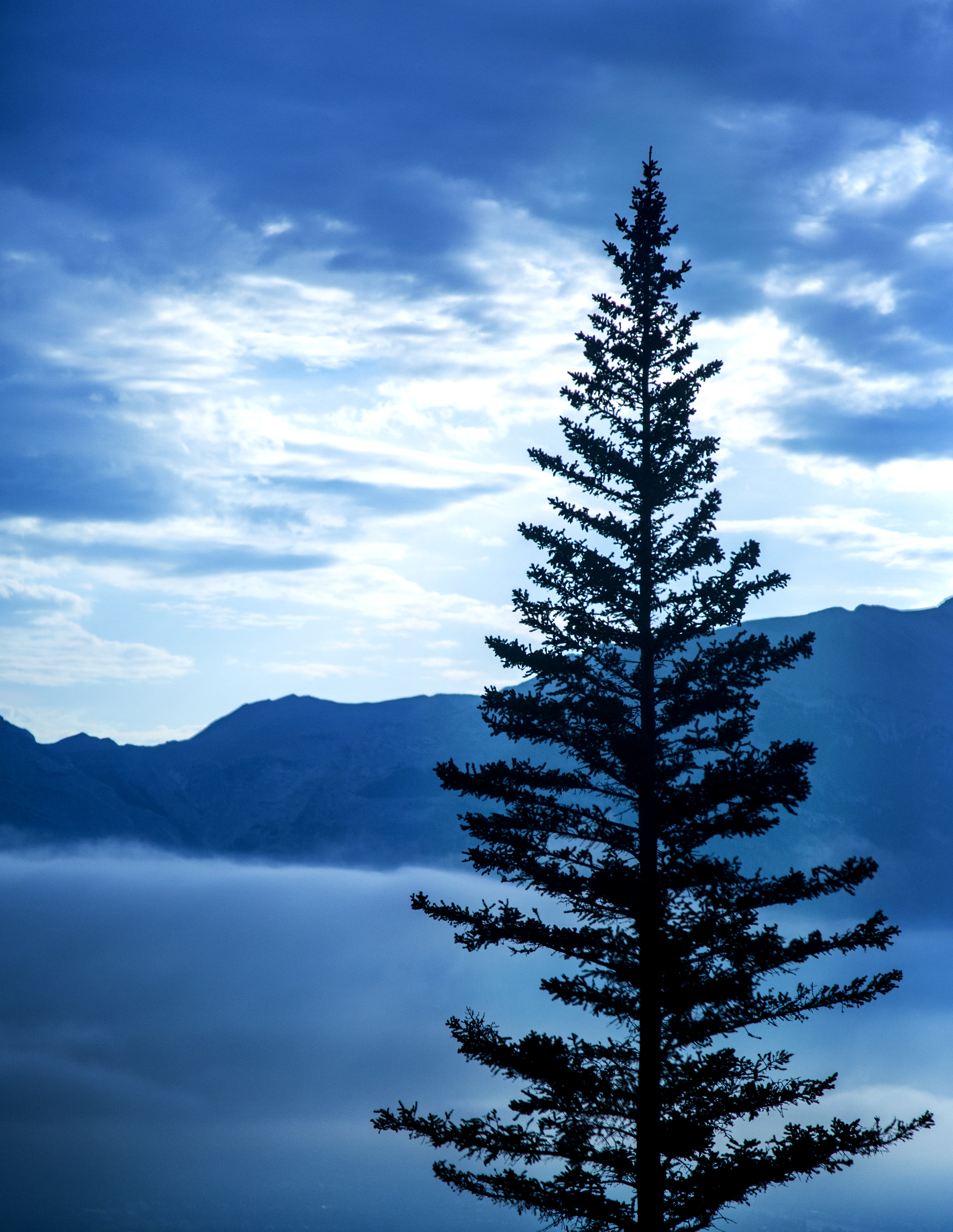 A tree is shilouetted against the sky above a foggy valley.
